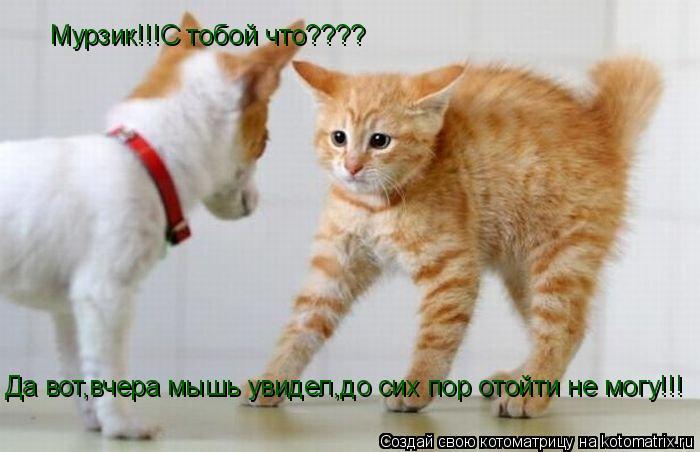 Котоматрица: Мурзик!!!С тобой что???? Да вот,вчера мышь увидел,до сих пор отойти не могу!!!