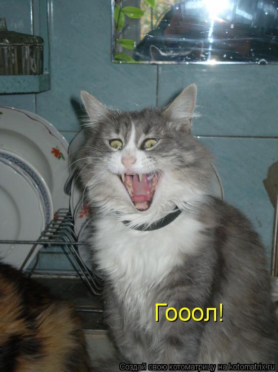 Котоматрица: Гооол!