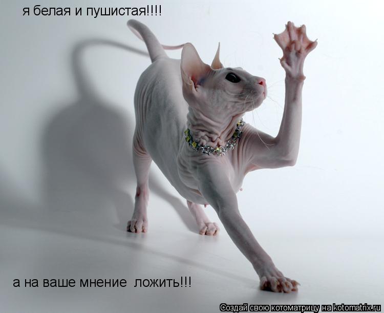 Котоматрица: я белая и пушистая!!!! а на ваше мнение  ложить!!!