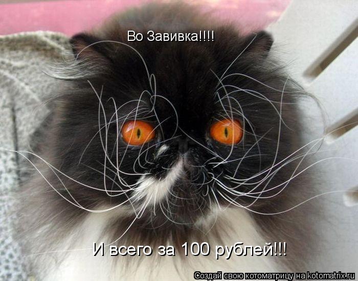 Котоматрица: Во Завивка!!!! И всего за 100 рублей!!!