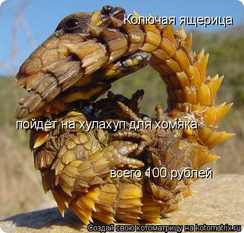Котоматрица: Колючая ящерица пойдёт на хулахуп для хомяка всего 100 рублей