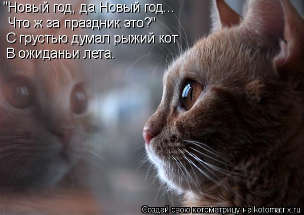 """Котоматрица: """"Новый год, да Новый год... Что ж за праздник это?"""" С грустью думал рыжий кот В ожиданьи лета."""