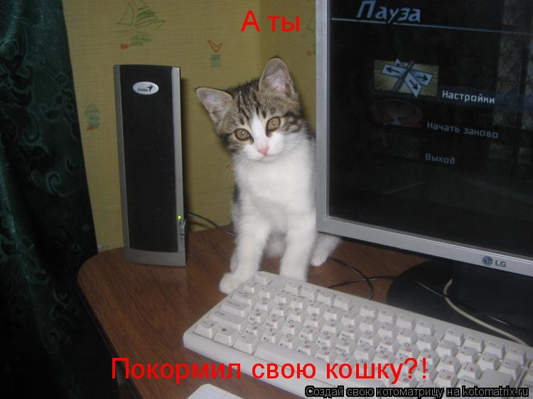 Котоматрица: А ты Покормил свою кошку?!