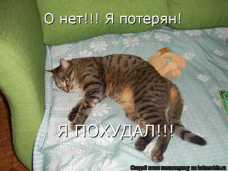 Котоматрица: О нет!!! Я потерян! Я ПОХУДАЛ!!!