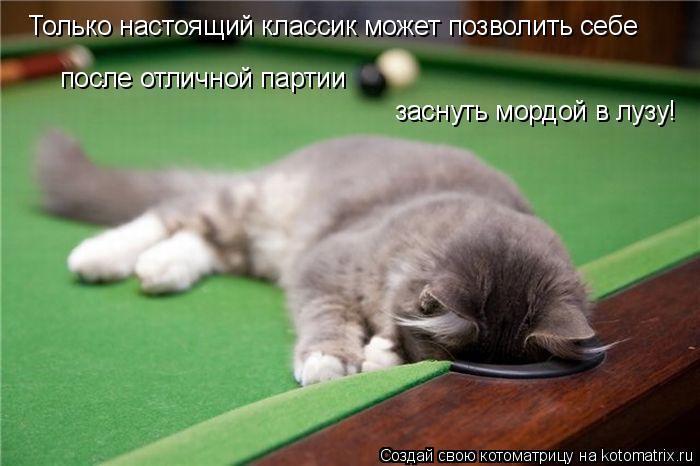 Котоматрица: Только настоящий классик может позволить себе заснуть мордой в лузу! после отличной партии