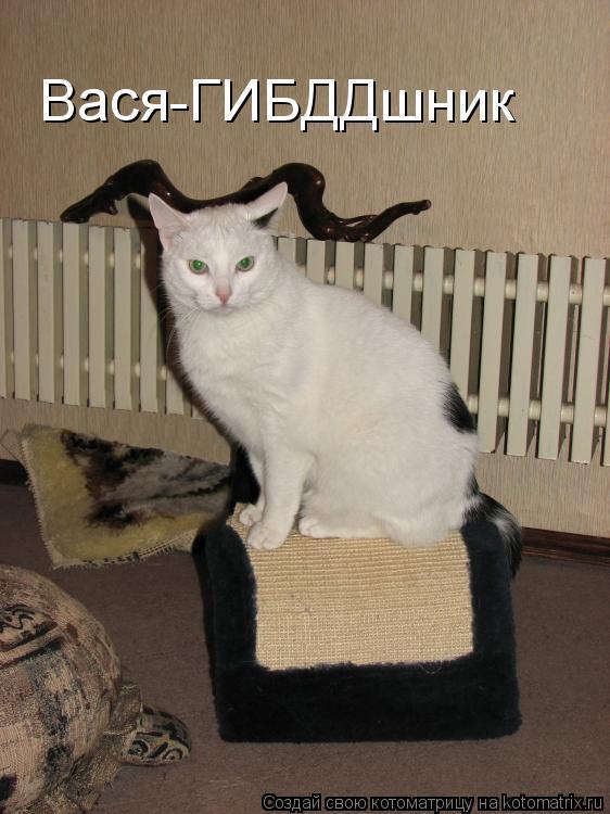 Котоматрица: Вася-ГИБДДшник