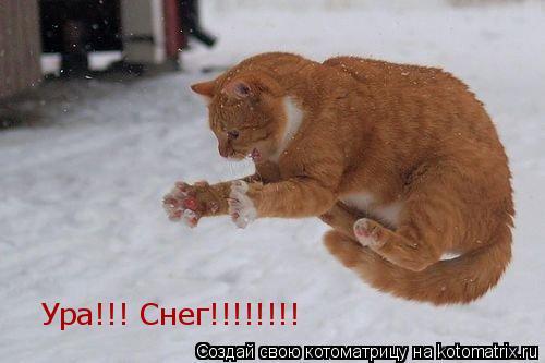 Котоматрица: Ура!!! Снег!!!!!!!!