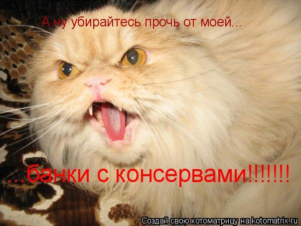 Котоматрица: А ну убирайтесь прочь от моей... ...банки с консервами!!!!!!!