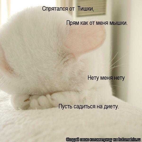 Котоматрица: Нету меня нету Пусть садиться на диету. Спрятался от  Тишки, Прям как от меня мышки.