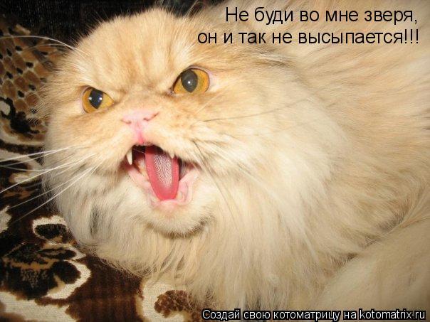 Котоматрица: Не буди во мне зверя,  он и так не высыпается!!!