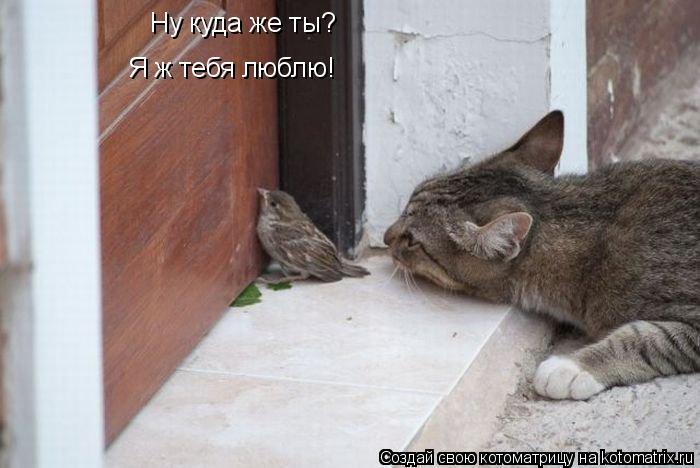 Котоматрица: Ну куда же ты? Я ж тебя люблю!