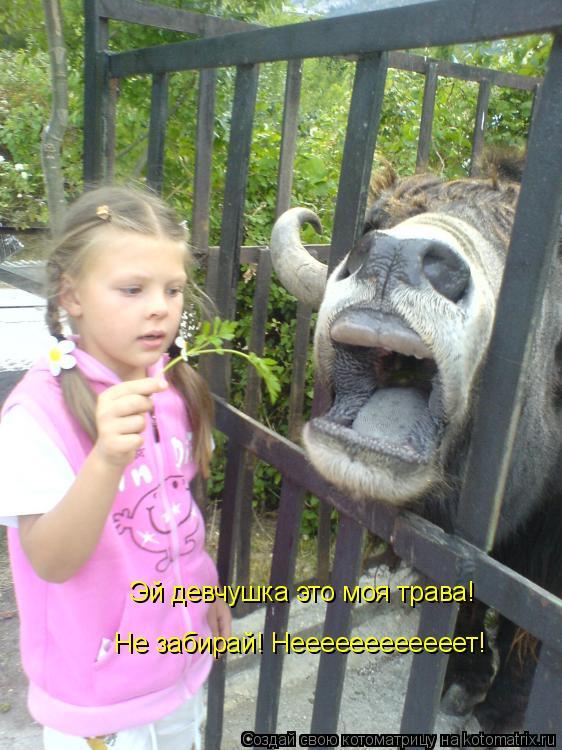 Котоматрица: Эй девчушка это моя трава! Не забирай! Неееееееееееет!