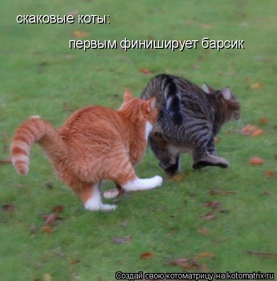 Котоматрица: скаковые коты:  первым финиширует барсик