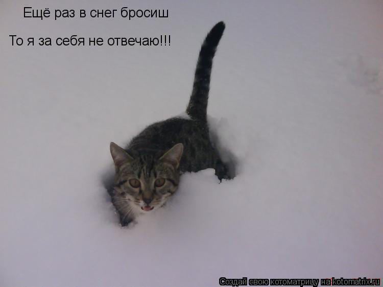 Котоматрица: Ещё раз в снег бросиш То я за себя не отвечаю!!!