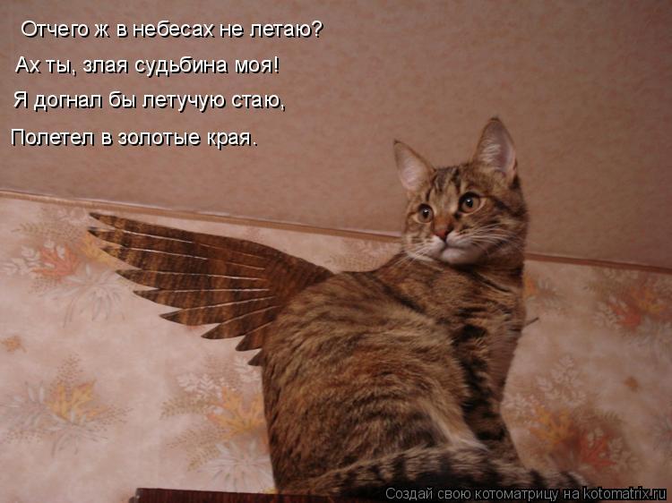 Котоматрица: Отчего ж в небесах не летаю? Ах ты, злая судьбина моя! Я догнал бы летучую стаю, Полетел в золотые края…