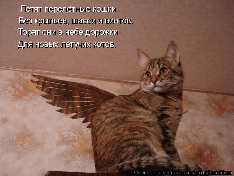 Котоматрица: Летят перелётные кошки Без крыльев, шасси и винтов, Торят они в небе дорожки Для новых летучих котов…