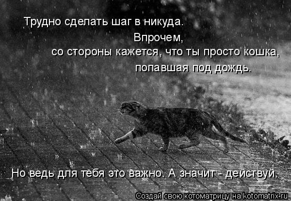 Котоматрица: Трудно сделать шаг в никуда. со стороны кажется, что ты просто кошка, Впрочем, попавшая под дождь. Но ведь для тебя это важно. А значит - дейст