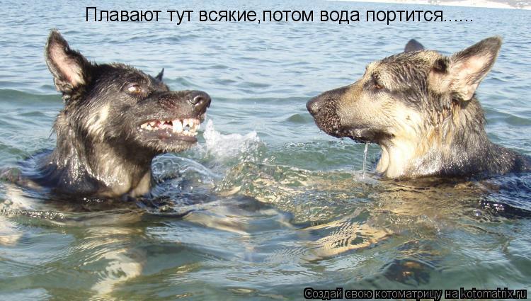 Котоматрица: Плавают тут всякие,потом вода портится......
