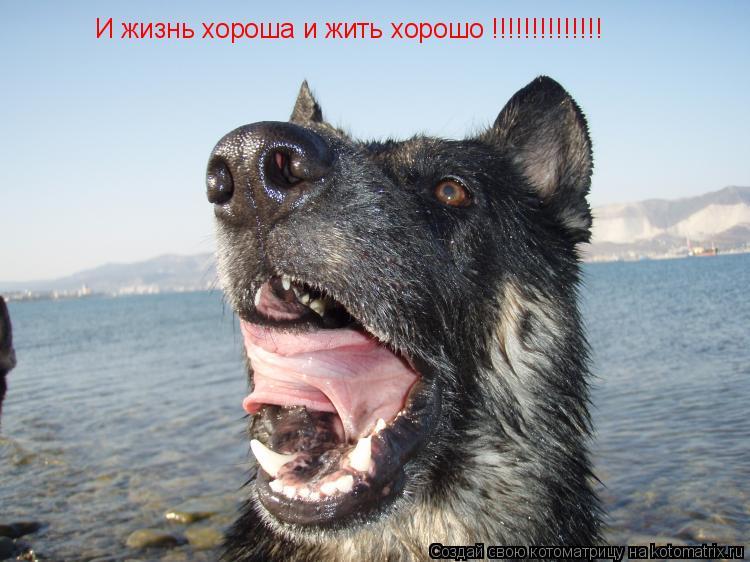 Котоматрица: И жизнь хороша и жить хорошо !!!!!!!!!!!!!!