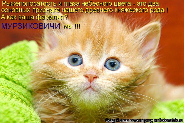 Котоматрица: Рыжеполосатость и глаза небесного цвета - это два основных признака нашего древнего княжеского рода ! А как ваша фамилия? МУРЗИКОВИЧИ мы !!!