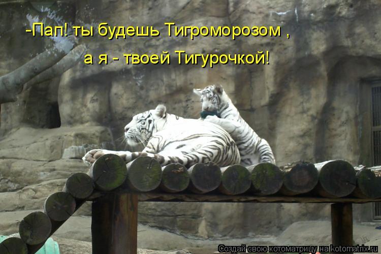 Котоматрица: -Пап! ты будешь Тигроморозом ,  а я - твоей Тигурочкой!