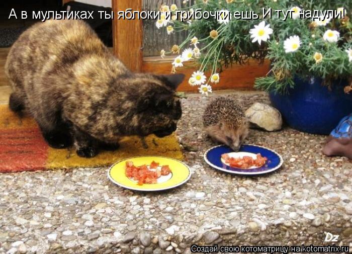 Котоматрица: А в мультиках ты яблоки и грибочки ешь. И тут надули!