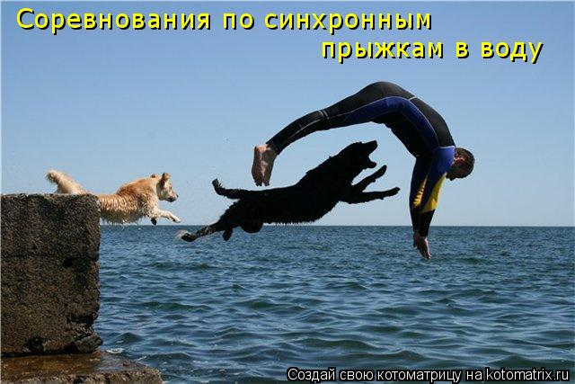 Котоматрица: Соревнования по синхронным прыжкам в воду