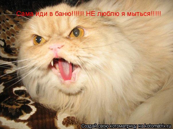 Котоматрица: Сама иди в баню!!!!!! НЕ люблю я мыться!!!!!