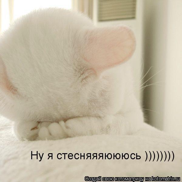 Котоматрица: Ну я стесняяяюююсь ))))))))