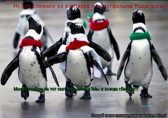 Котоматрица: Ну,вот,сбежали из зоопарка и мультфильма Мадагаскар! Может вообще на тот свет отправимся?Мы ж всегда сбегаем!!!