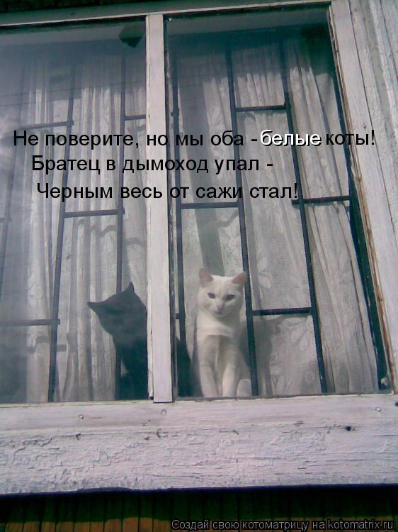Котоматрица: Черным весь от сажи стал! Не поверите, но мы оба -  белые коты! Братец в дымоход упал -