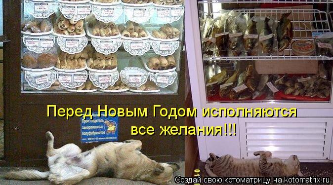 Котоматрица: Перед Новым Годом исполняются все желания!!!