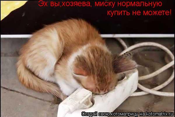 Котоматрица: Эх вы,хозяева, миску нормальную  купить не можете!