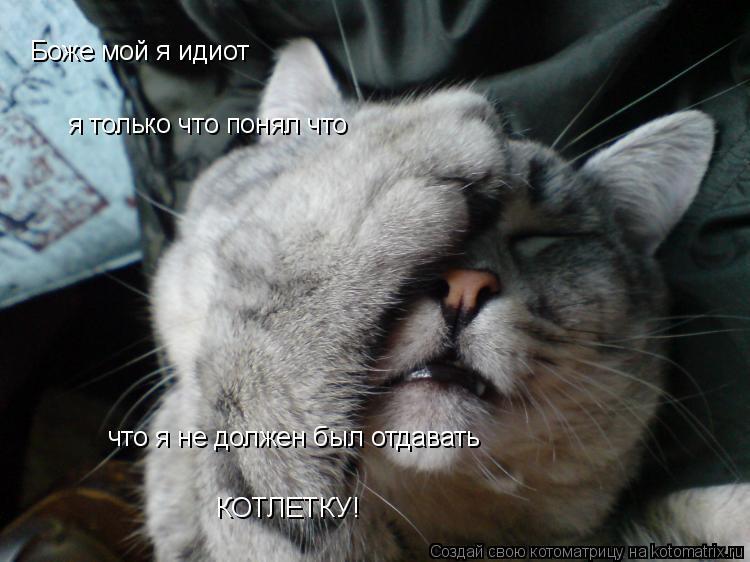 Котоматрица: Боже мой я идиот я только что понял что что я не должен был отдавать КОТЛЕТКУ!