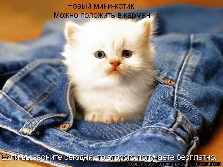 Котоматрица: Новый мини-котик Можно положить в карман Если вы звоните сегодня, то второго получаете бесплатно.