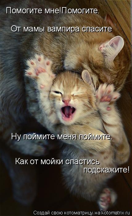 Котоматрица: Помогите мне!Помогите. От мамы вампира спасите Ну поймите меня поймите. Как от мойки спастись подскажите!
