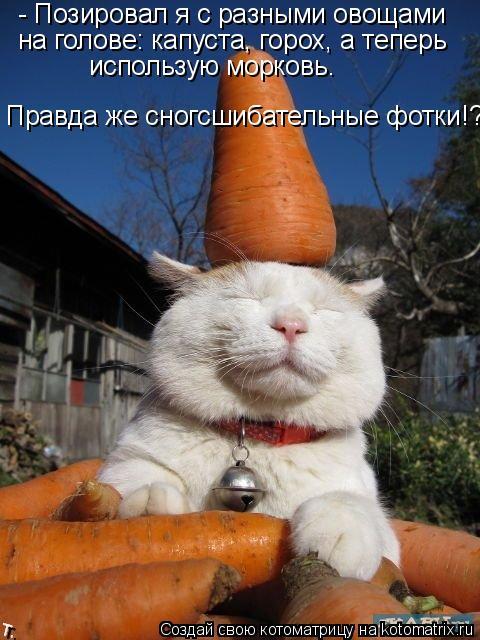 Котоматрица: - Позировал я с разными овощами на голове: капуста, горох, а теперь  использую морковь. Правда же сногсшибательные фотки!?