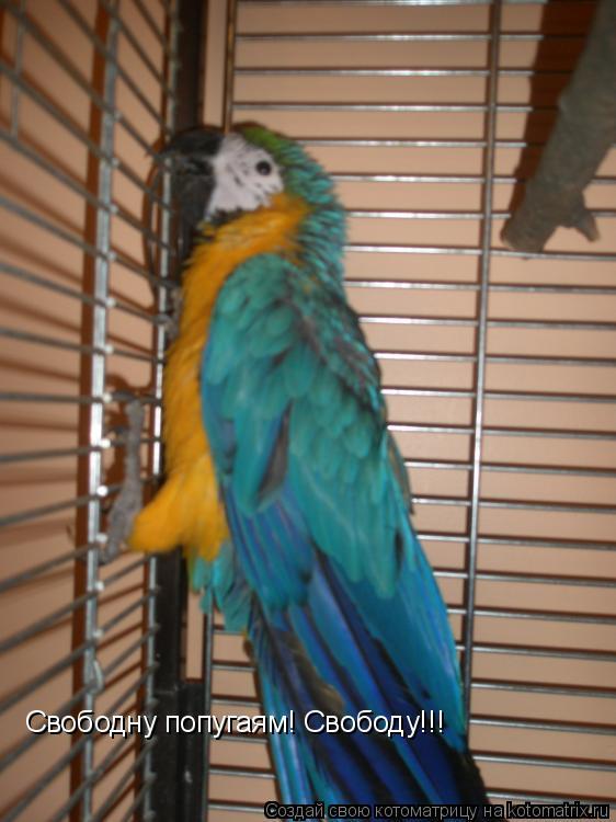 Котоматрица: Свободну попугаям! Свободу!!!