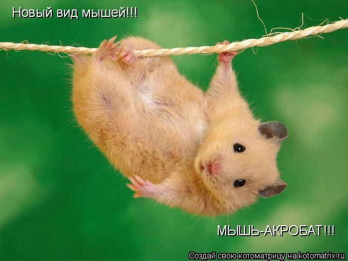 Котоматрица: Новый вид мышей!!! МЫШЬ-АКРОБАТ!!!