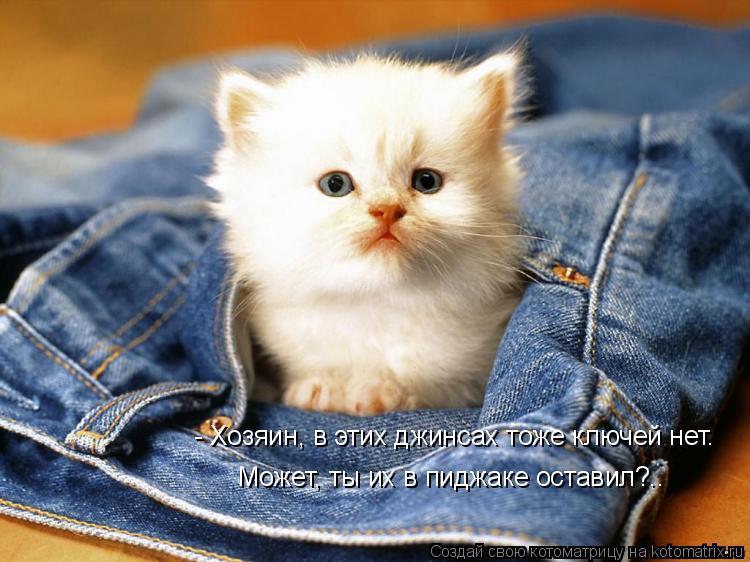 Котоматрица: - Хозяин, в этих джинсах тоже ключей нет. Может, ты их в пиджаке оставил?..