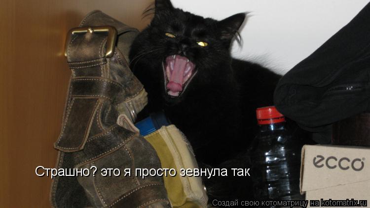 Котоматрица: Страшно? это я просто зевнула так
