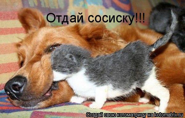 Котоматрица: Отдай сосиску!!!