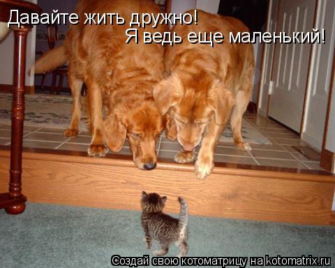 Котоматрица: Давайте жить дружно! Я ведь еще маленький!