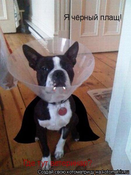 Котоматрица: Я чёрный плащ! Где тут ветеринар?