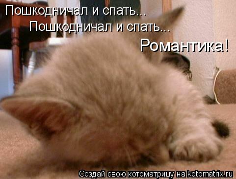 Котоматрица: Пошкодничал и спать... Пошкодничал и спать... Романтика!