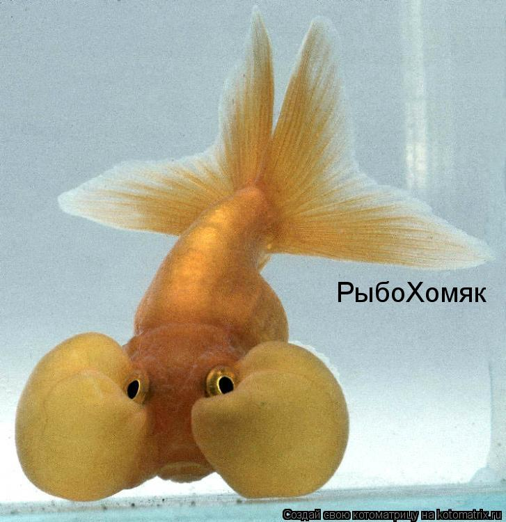 Котоматрица: РыбоХомяк