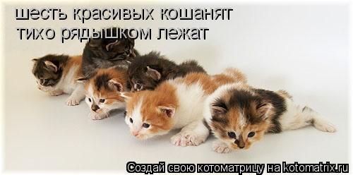 Котоматрица: шесть красивых кошанят тихо рядышком лежат