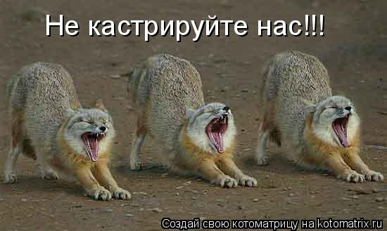 Котоматрица: Не кастрируйте нас!!!
