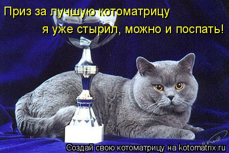 Котоматрица: Приз за лучшую котоматрицу я уже стырил, можно и поспать!