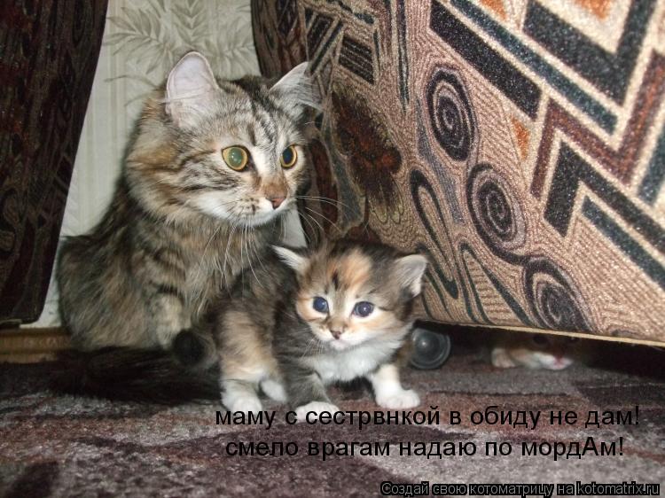 Котоматрица: маму с сестрвнкой в обиду не дам! смело врагам надаю по мордАм!
